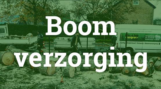 Boom verzorging Hoogezand